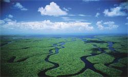 everglades-eco-safari-tour.jpg